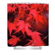 Red Leaves In Fall  Shower Curtain
