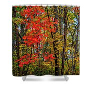 Red Leaves Of Autumn Shower Curtain