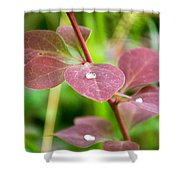Red Leaves Plant Shower Curtain