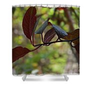 Red Leaves With Frame Shower Curtain
