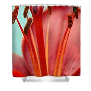 Red Lily Reach Shower Curtain