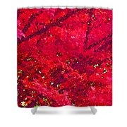 Red Maple 2 Version 1 Shower Curtain
