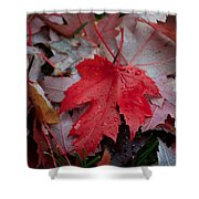 Red Maple Leaf  Shower Curtain