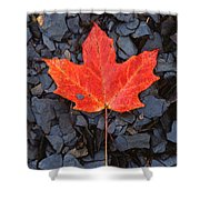 Red Maple Leaf On Black Shale Shower Curtain