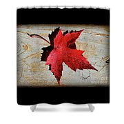 Red Maple Leaf With Burnt Edge Shower Curtain