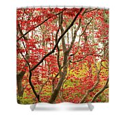 Red Maple Leaves And Branches Shower Curtain