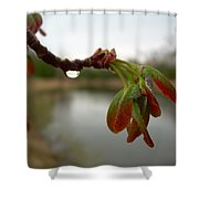 Red Maple Seed Pods At Dawn Shower Curtain