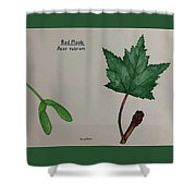 Red Maple Tree Id Shower Curtain