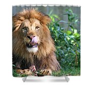 Red Meat Shower Curtain