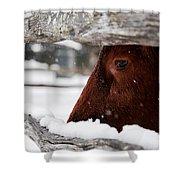 Red Milking Devon Snowflakes Shower Curtain