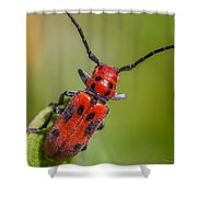 Red Milkweed Beetle Shower Curtain