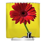 Red Mum Against Yellow Background Shower Curtain