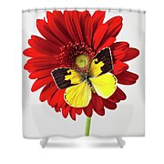 Red Mum With Dogface Butterfly Shower Curtain by Garry Gay