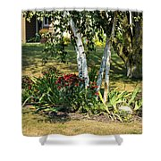 Red Mums And Birch Trees Shower Curtain