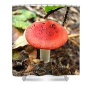 Red Mushroom 2 Shower Curtain