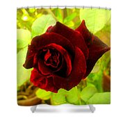 Red Nature Shower Curtain