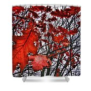 Red Oaks Shower Curtain