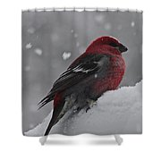Red On White Shower Curtain