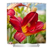 Red Orange Lily By The Lake Shower Curtain