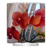 Red Orchid Flowers 01 Shower Curtain