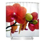 Red Orchid Flowers 02 Shower Curtain