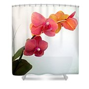 Red Pink Golden Orchid Flowers 03 Shower Curtain