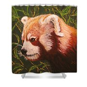 Red Panda 2 Shower Curtain