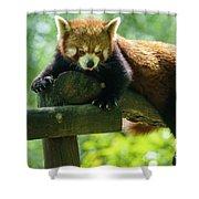 Red Panda Ailurus Fulgens Jerez De La Frontera Spain Shower Curtain