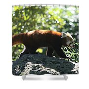 Red Panda In A Tree Shower Curtain