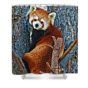 Red Panda Shower Curtain