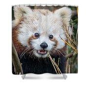 Red Panda Wonder Shower Curtain