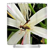 Red Paper Wasp And Spider Lily 000 Shower Curtain