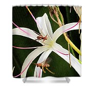 Red Paper Wasps And Spider Lily Shower Curtain