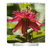 Red Passion Flower Shower Curtain