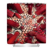 Red Pencil Urchin Shower Curtain