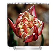 Red Peony Tulip Shower Curtain