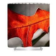 Red Pin Oak Leaf Shower Curtain