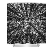 Red Pine Tree Tops In Black And White Shower Curtain