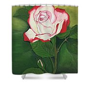 Red-pink Rose Shower Curtain
