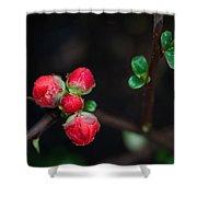 Red Plum Flowers In Rain Shower Curtain