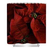 Red Poinsettia Shower Curtain by Ann Garrett