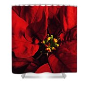 Red Poinsettia Floral Art Shower Curtain