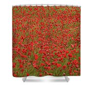 Red Poppies 2 Shower Curtain