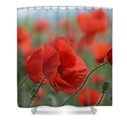Red Poppies Blooming Shower Curtain