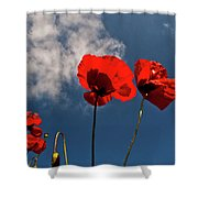 Red Poppies On Blue Sky Shower Curtain