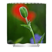 Red Poppy Bud Shower Curtain