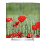 Red Poppy Flower And Green Wheat Nature Spring Scene Shower Curtain