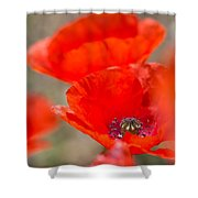 Red Poppy For Remembrance Shower Curtain