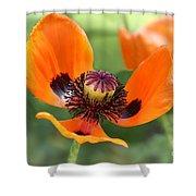 Red Poppy I Shower Curtain