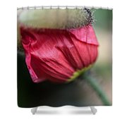 Red Poppy Sneaking Out Shower Curtain